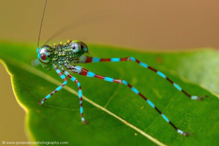 serangga pelik