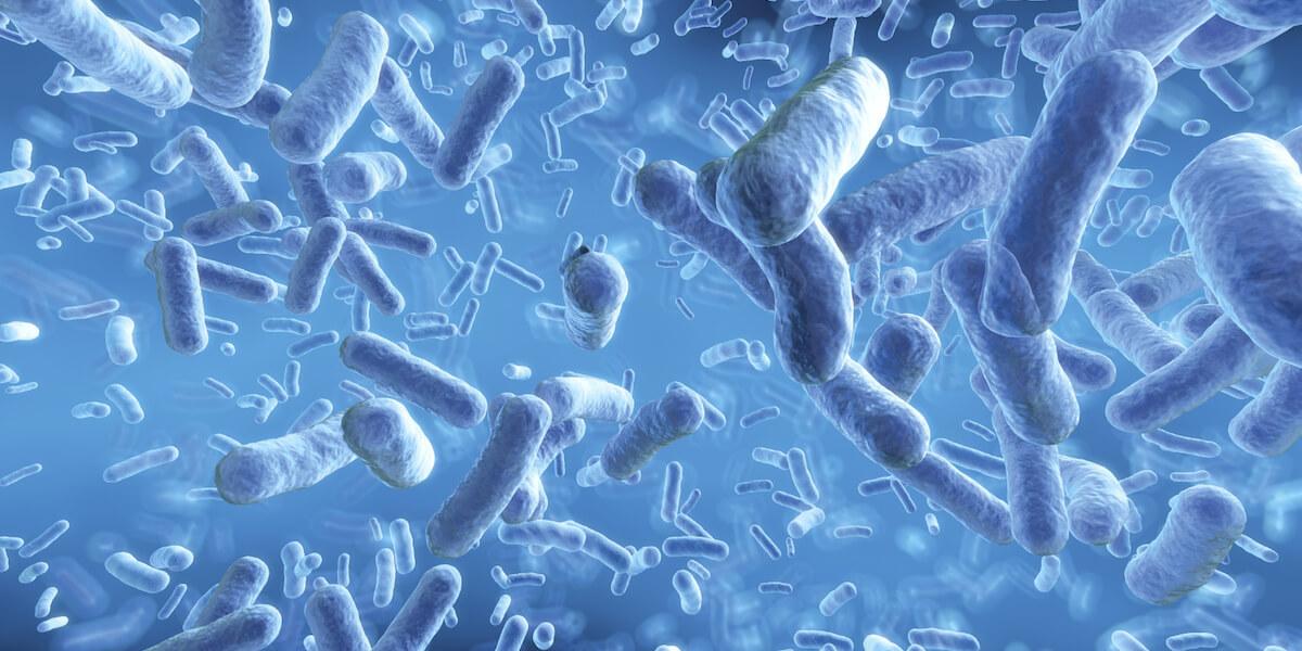 sesetengah bakteria tidak bahaya