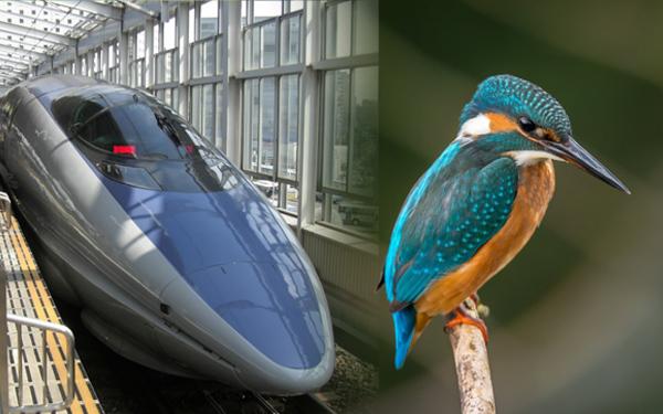 shinkansen bullet train burung raja udang