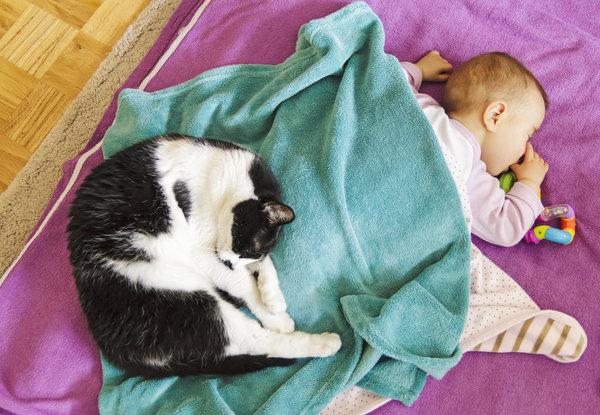 si kecil tidur nyenyak bersama haiwan peliharaan pet mereka 2