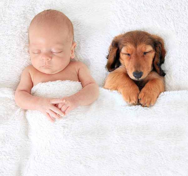 si kecil tidur nyenyak bersama haiwan peliharaan pet mereka 3