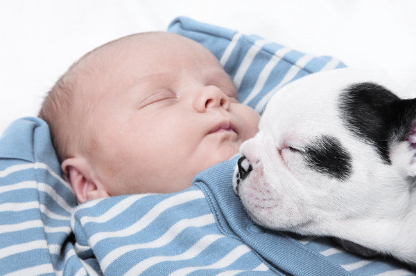 si kecil tidur nyenyak bersama haiwan peliharaan pet mereka 7