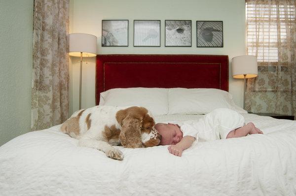 si kecil tidur nyenyak bersama haiwan peliharaan pet mereka 8