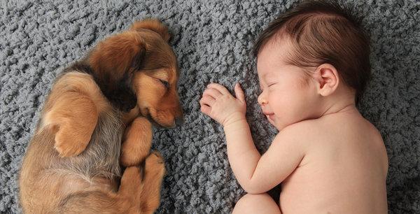 si kecil tidur nyenyak bersama haiwan peliharaan pet mereka