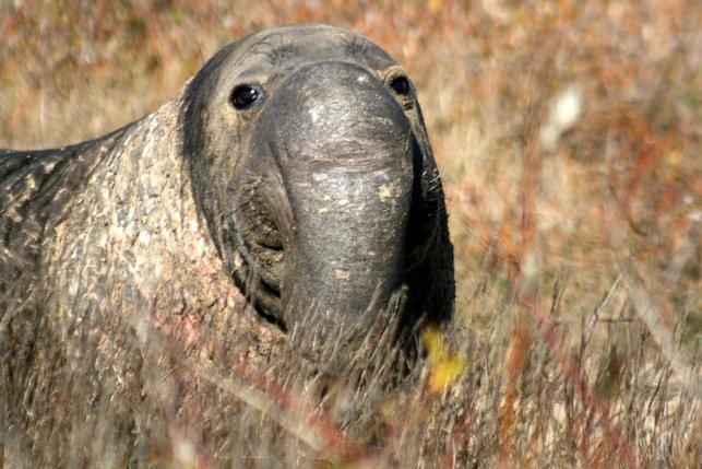 spesies makhluk haiwan binatang paling hodoh aneh ganjil dalam dunia 5dl35