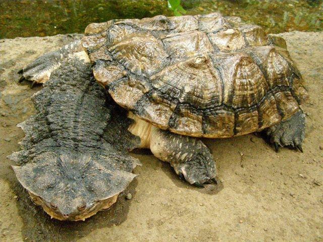 spesies makhluk haiwan binatang paling hodoh aneh ganjil dalam dunia 5dl4