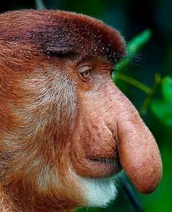 spesies makhluk haiwan binatang paling hodoh aneh ganjil dalam dunia 5dl46