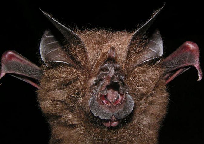 spesies makhluk haiwan binatang paling hodoh aneh ganjil dalam dunia 5dl54