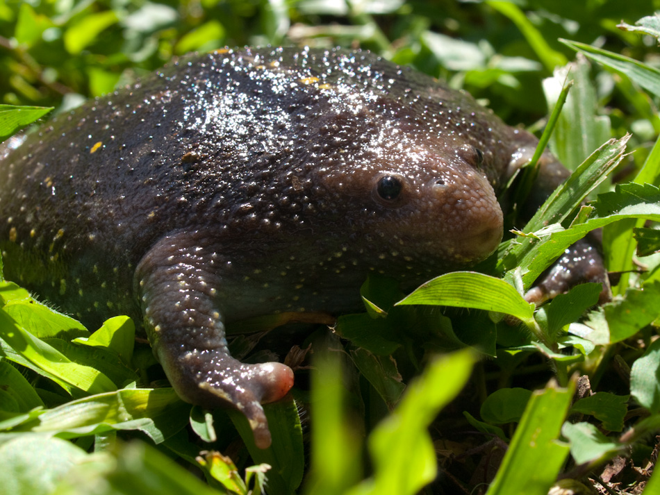 spesies makhluk haiwan binatang paling hodoh aneh ganjil dalam dunia 5dl58