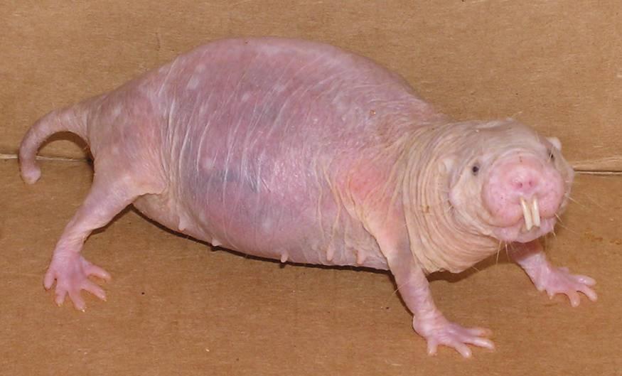 spesies makhluk haiwan binatang paling hodoh aneh ganjil dalam dunia 5dl95