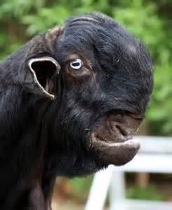 spesies makhluk haiwan binatang paling hodoh aneh ganjil dalam dunia