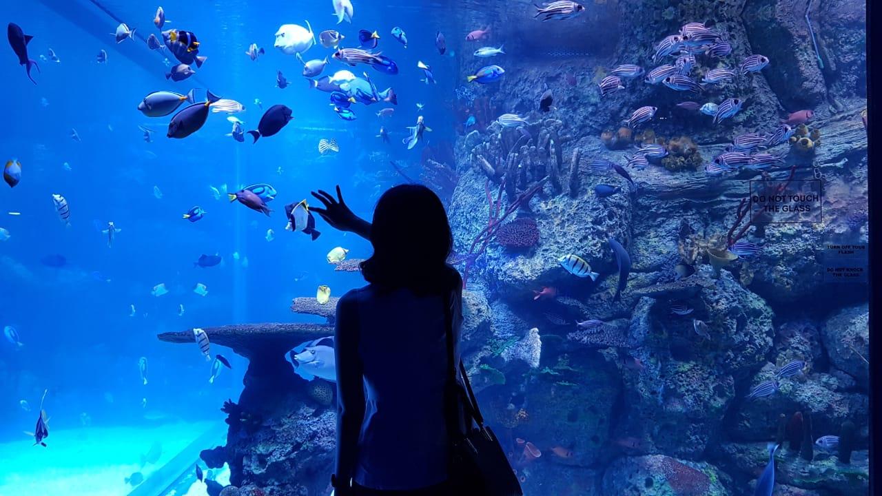 spesis baru hidupan laut