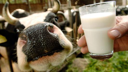 susu mentah tidak dipasteurkan keracunan makanan