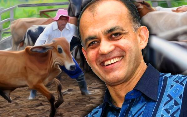 syed mokhtar bukhari ternak lembu