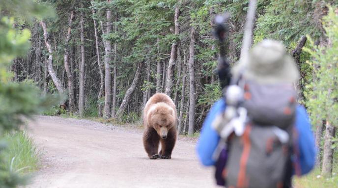 taman negara yellowstone amerika syarikat beruang grizzly