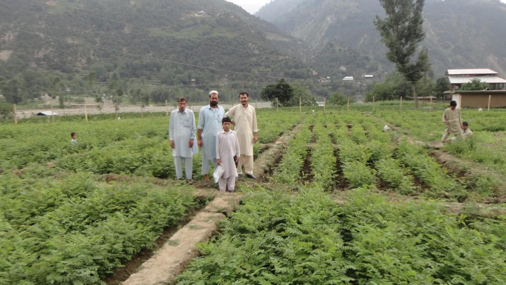 tapak semaian pokok di pakistan