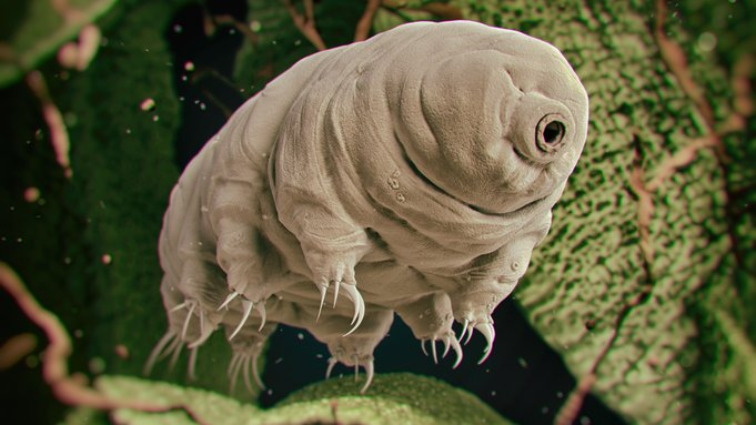 tardigrade beruang air superpower
