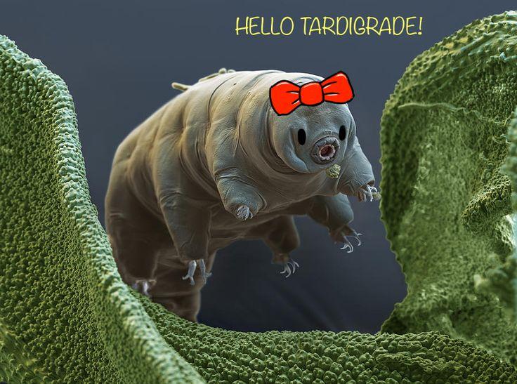 tardigrade makhluk spesies paling lasak dalam dunia