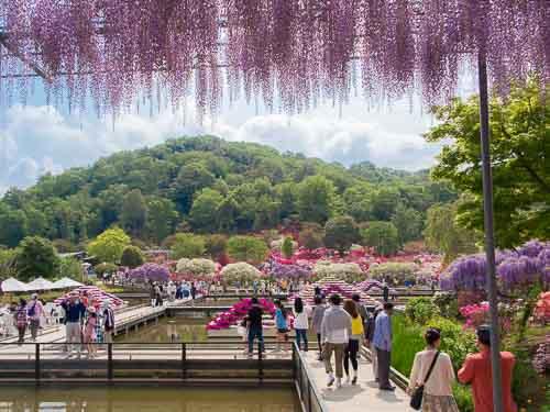 tasik di ashikaga flower park