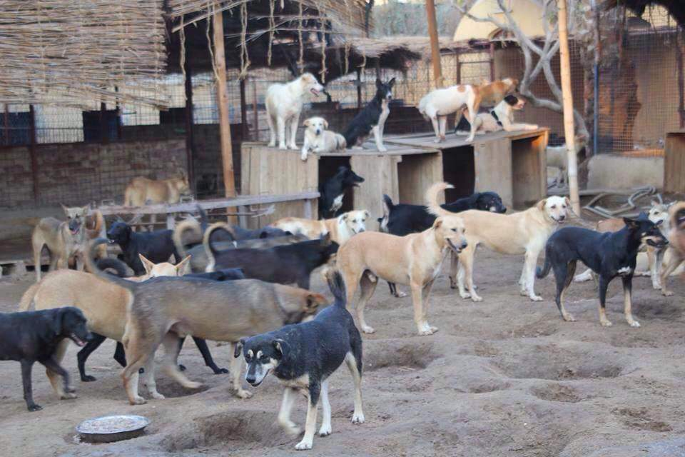 tempat lepak anjing di cairo