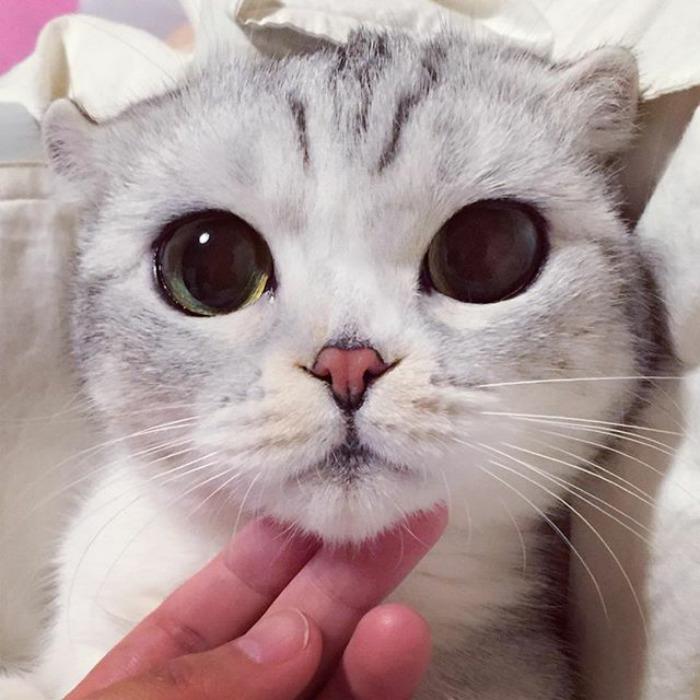 tengoklah mata hana ni
