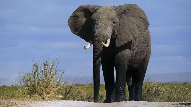 terdorong gajah kerana besarnya senarai peribahasa yang anda tak pernah dengar