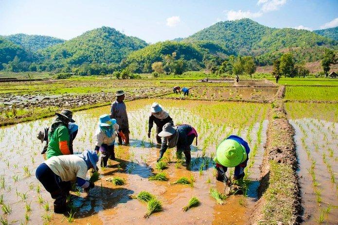 thailand 10 negara pengeluar beras terbesar di dunia
