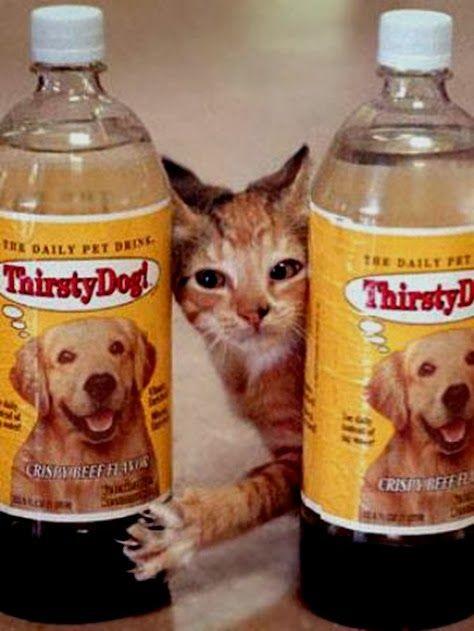 thirsty cat dan thirsty dog