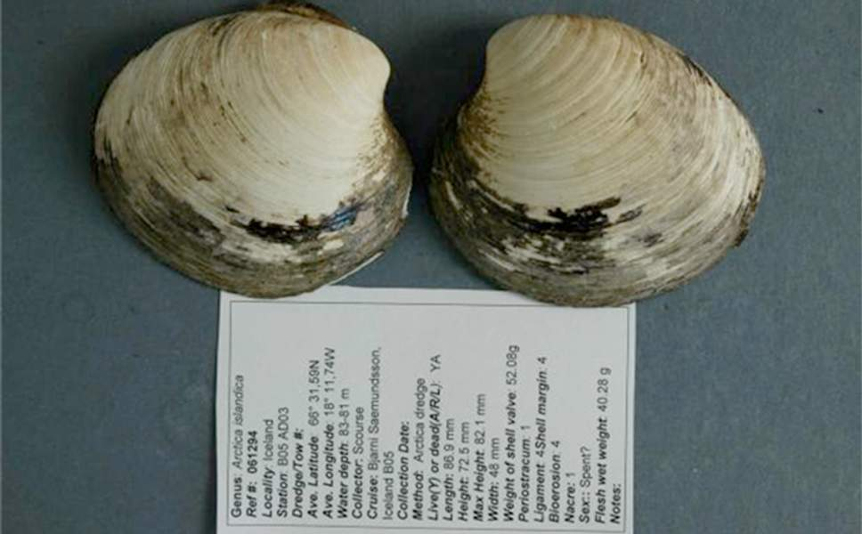 tiram berusia 507 tahun makhluk paling panjang usia