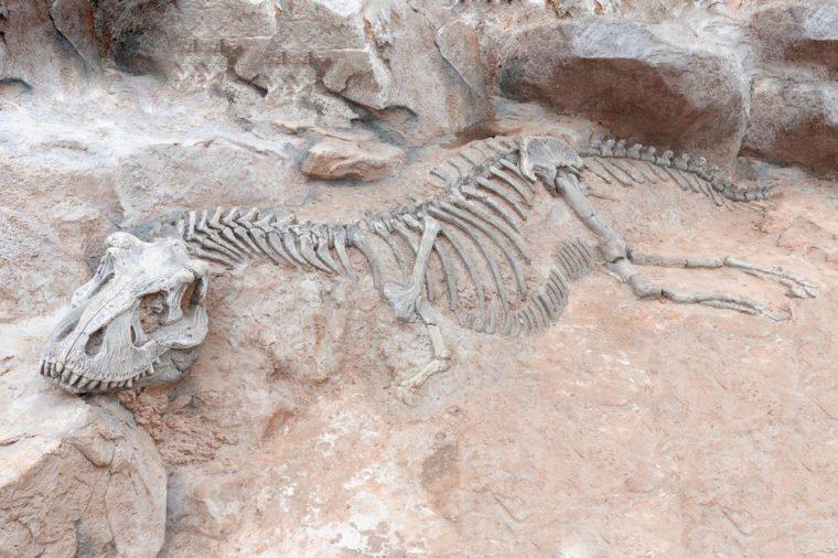 tulang dinosaur barang paling mahal di dunia yang pernah dicuri