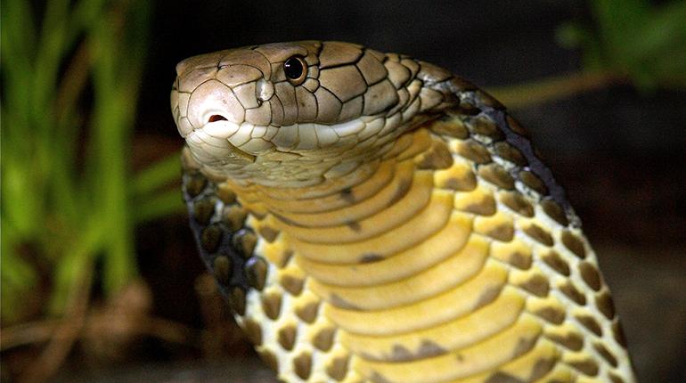 ular 290