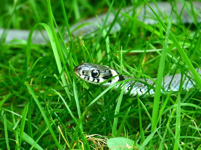 ular daun