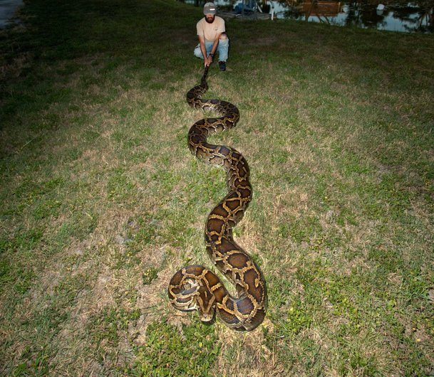 ular paling besar di dunia 2
