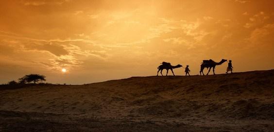 unta padang pasir