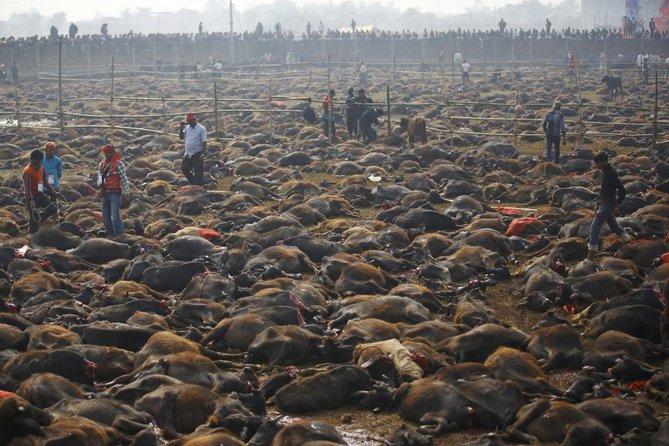 upacara korban haiwan hindu