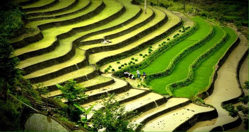vietnam 10 negara pengeluar beras terbesar di dunia
