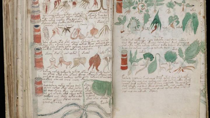 voynich manuscript 7ej77