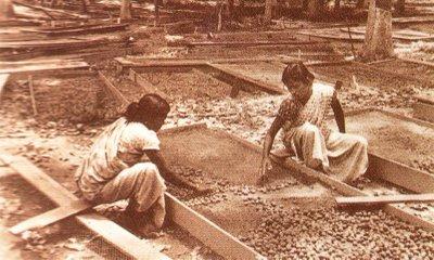 wanita india mengusahakan tanaman