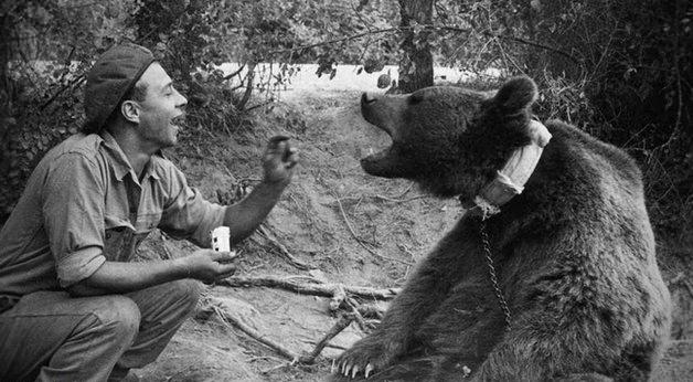 wojtek bear hero perang