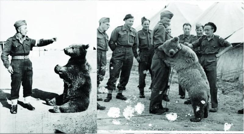 wojtek beruang hero peperangan
