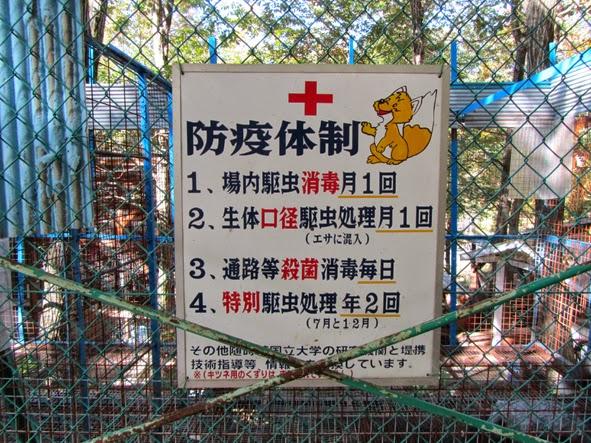 zoo musang