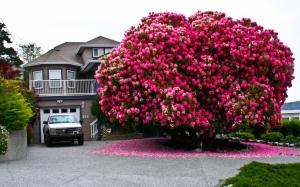16 Pokok Tercantik Di Dunia