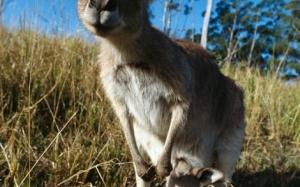 5 haiwan ini menjaga 'bayi' mereka dengan penuh kasih sayang