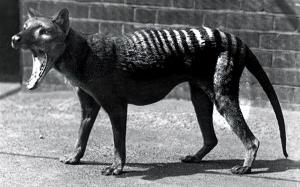 4 Spesis Haiwan Yang Telah Pupus Akibat Kerakusan Manusia
