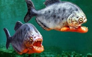 7 Spesis Ikan Paling Berbahaya Di Dunia