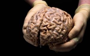Al-Quran dan Anatomi Otak
