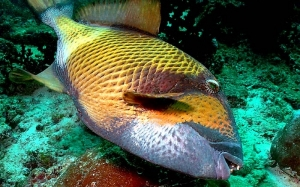Anda mungkin sering tertanya tanya adakah ikan tidur atau tidak? Ini jawapannya