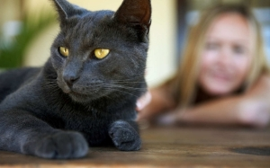 Berita Gembira Untuk Penggemar Kucing Mengenai Salah Sangka Kita ...