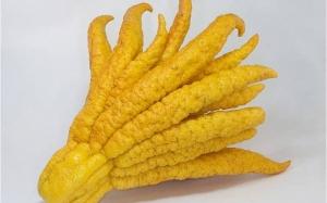 Buah-buahan yang pelik dan tidak diketahui kewujudannya