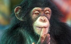 Kebolehan berfikir Cimpanzi setaraf kanak-kanak berusia 4 tahun